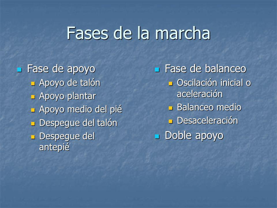 Fases de la marcha Fase de apoyo Fase de balanceo Doble apoyo