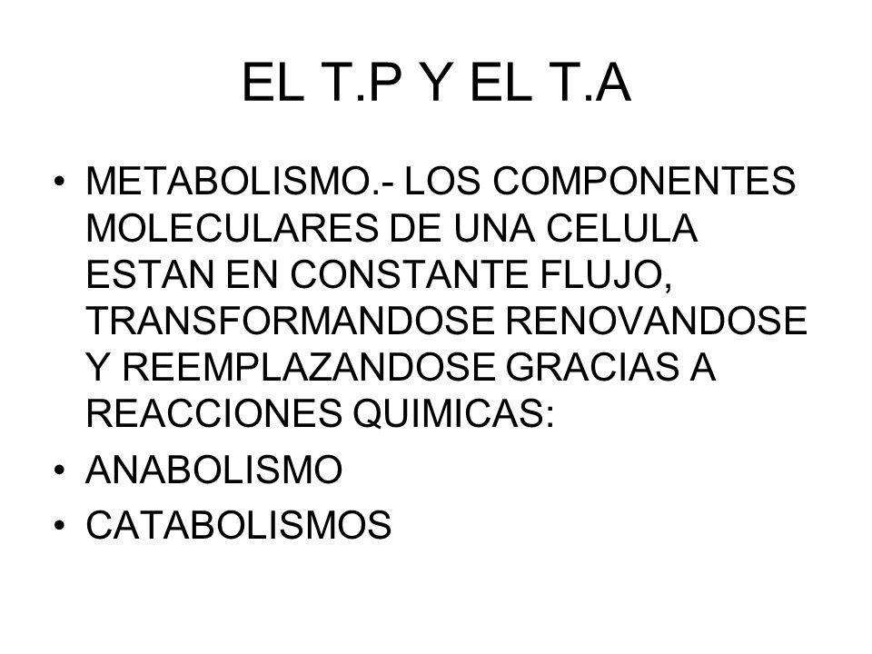 EL T.P Y EL T.A