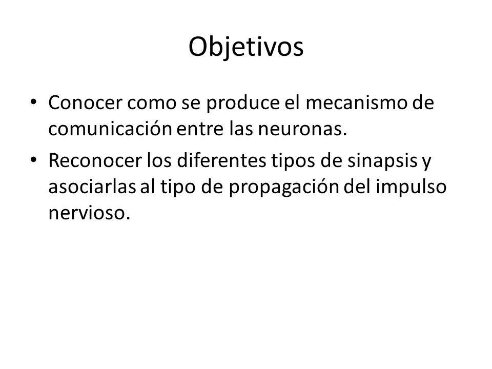 Objetivos Conocer como se produce el mecanismo de comunicación entre las neuronas.