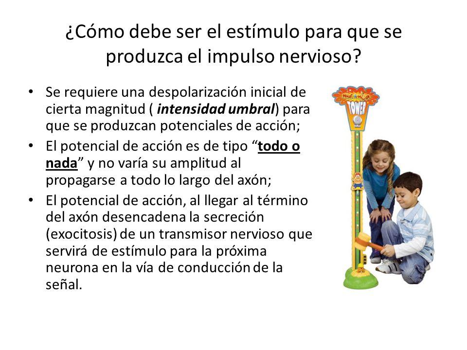 ¿Cómo debe ser el estímulo para que se produzca el impulso nervioso