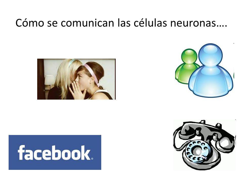 Cómo se comunican las células neuronas….