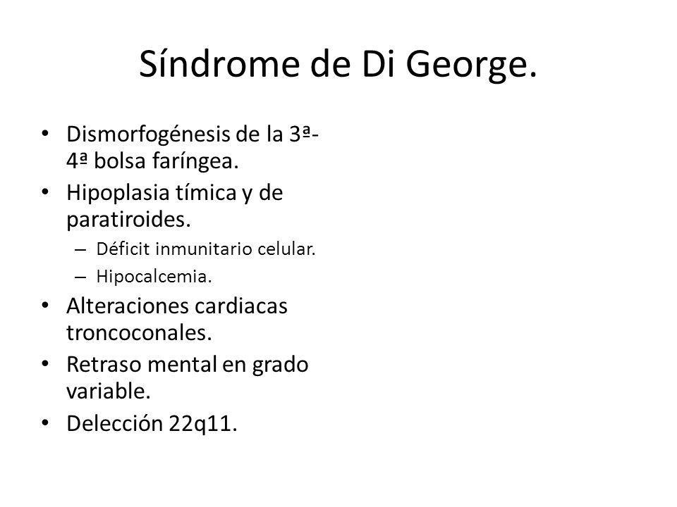 Síndrome de Di George. Dismorfogénesis de la 3ª-4ª bolsa faríngea.