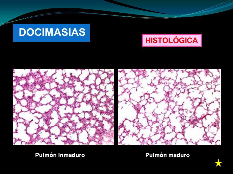 DOCIMASIAS HISTOLÓGICA Pulmón inmaduro Pulmón maduro