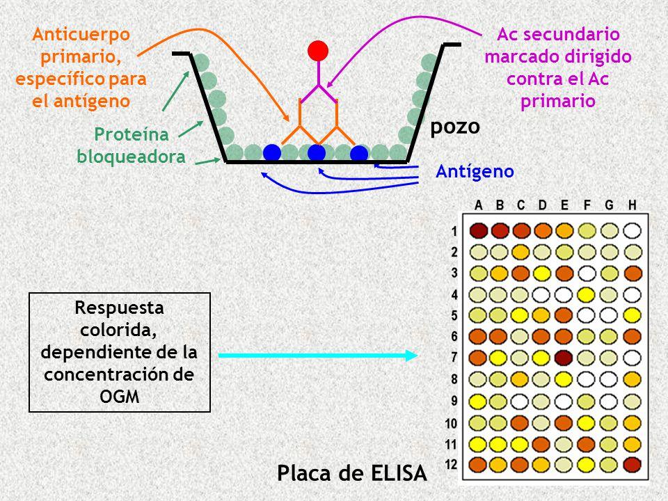 pozo Placa de ELISA Anticuerpo primario, específico para el antígeno