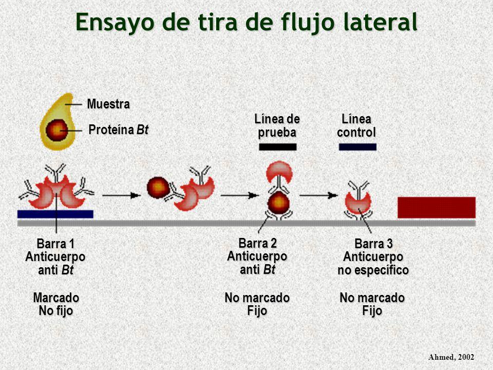 Ensayo de tira de flujo lateral Anticuerpo no específico