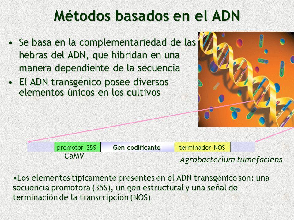 Métodos basados en el ADN
