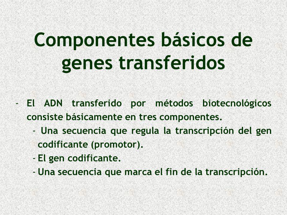 Componentes básicos de genes transferidos