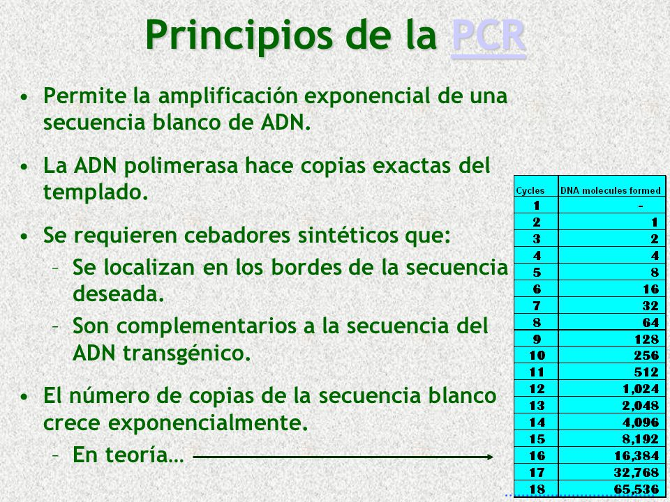 Principios de la PCR Permite la amplificación exponencial de una secuencia blanco de ADN. La ADN polimerasa hace copias exactas del templado.