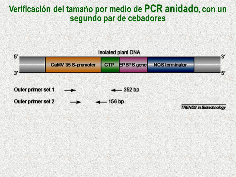 Verificación del tamaño por medio de PCR anidado, con un segundo par de cebadores