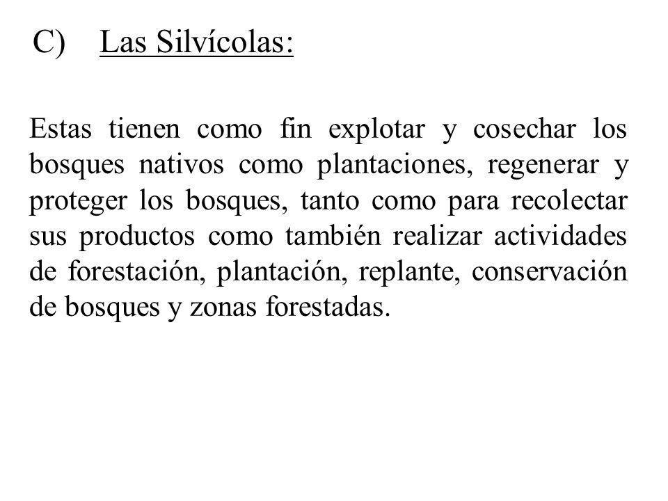 C) Las Silvícolas: