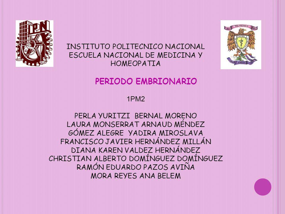 PERIODO EMBRIONARIO INSTITUTO POLITECNICO NACIONAL