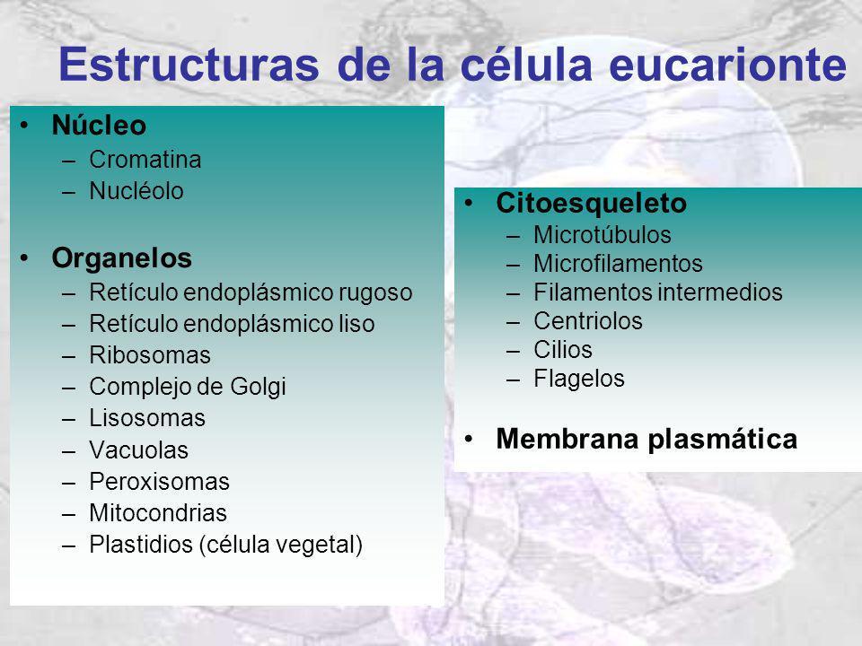 Estructuras de la célula eucarionte