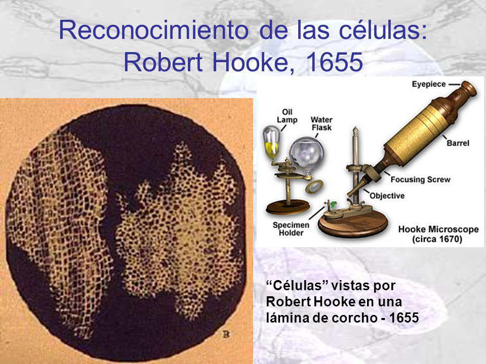 Reconocimiento de las células: Robert Hooke, 1655
