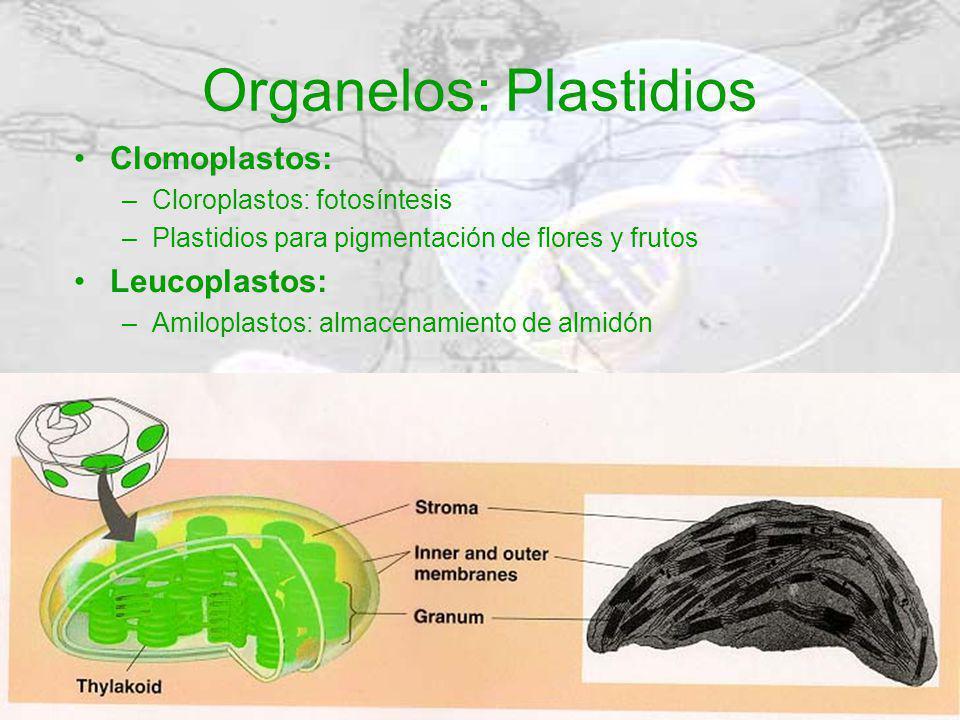 Organelos: Plastidios