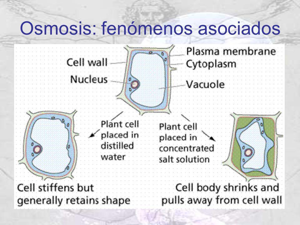 Osmosis: fenómenos asociados