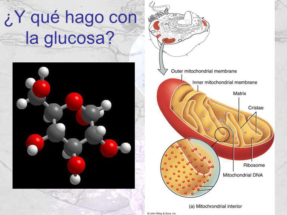 ¿Y qué hago con la glucosa