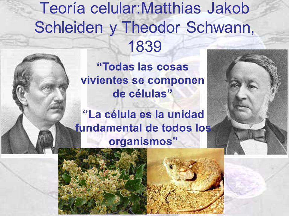 Teoría celular:Matthias Jakob Schleiden y Theodor Schwann, 1839