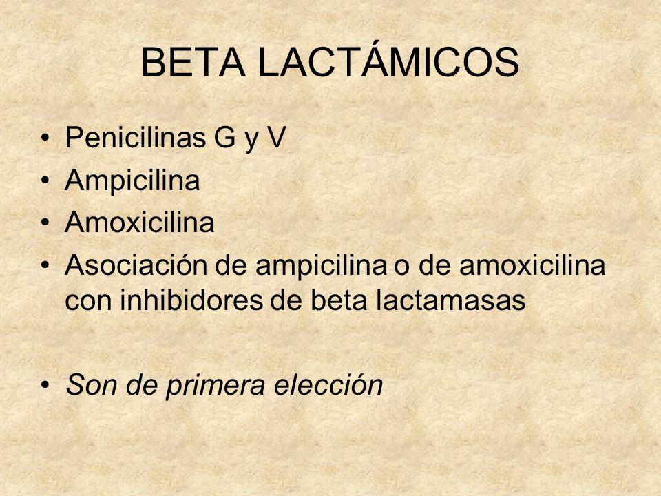 BETA LACTÁMICOS Penicilinas G y V Ampicilina Amoxicilina