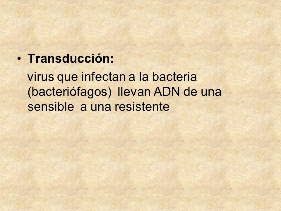 Transducción: virus que infectan a la bacteria (bacteriófagos) llevan ADN de una sensible a una resistente.