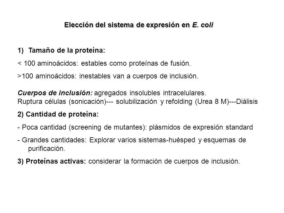 Elección del sistema de expresión en E. coli