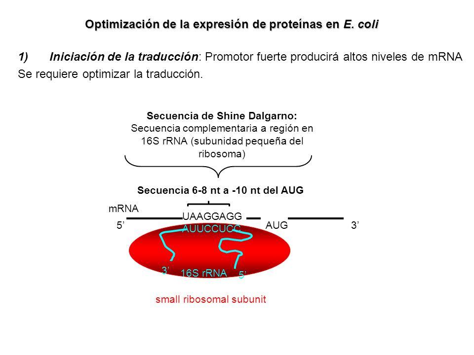 Optimización de la expresión de proteínas en E. coli