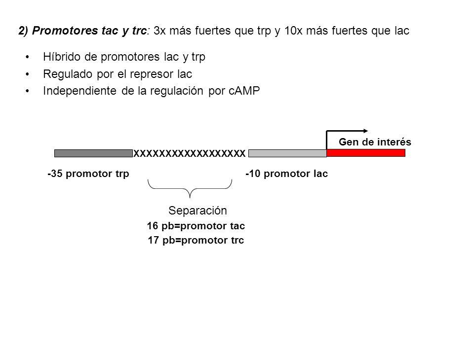 Híbrido de promotores lac y trp Regulado por el represor lac