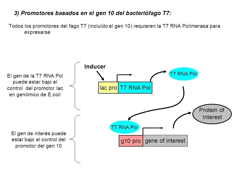 El gen de interés puede estar bajo el control del promotor del gen 10