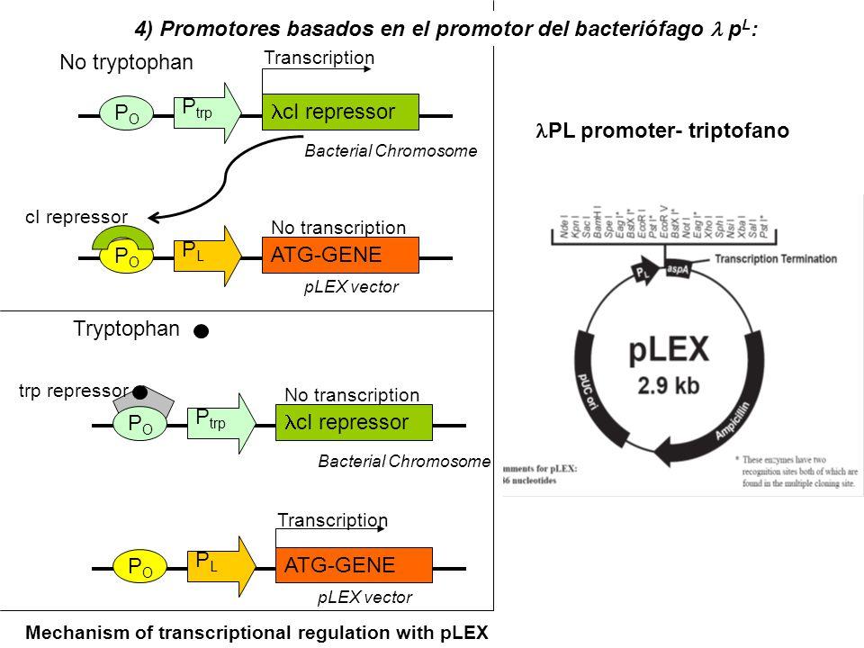 4) Promotores basados en el promotor del bacteriófago l pL: