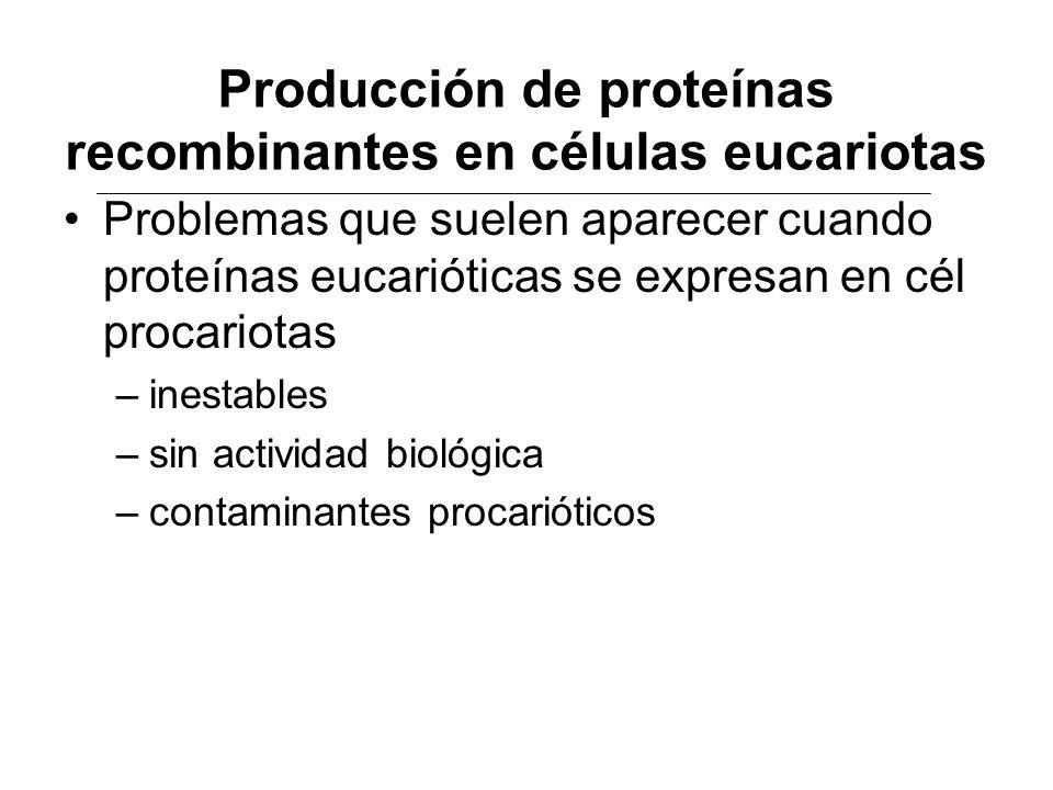Producción de proteínas recombinantes en células eucariotas