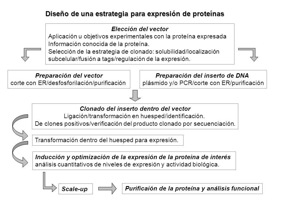 Diseño de una estrategia para expresión de proteínas