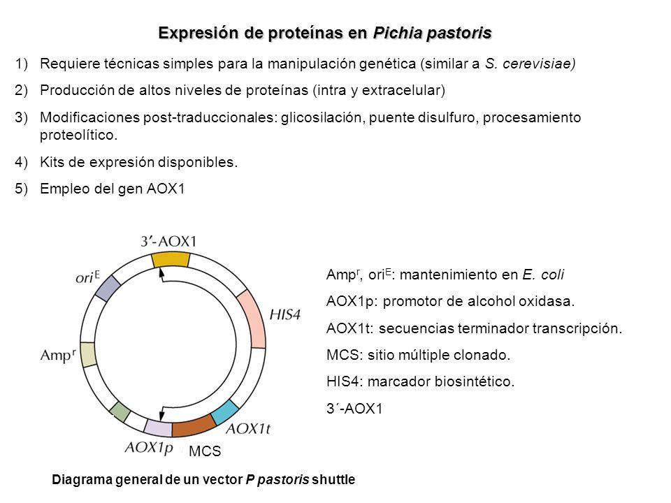 Expresión de proteínas en Pichia pastoris