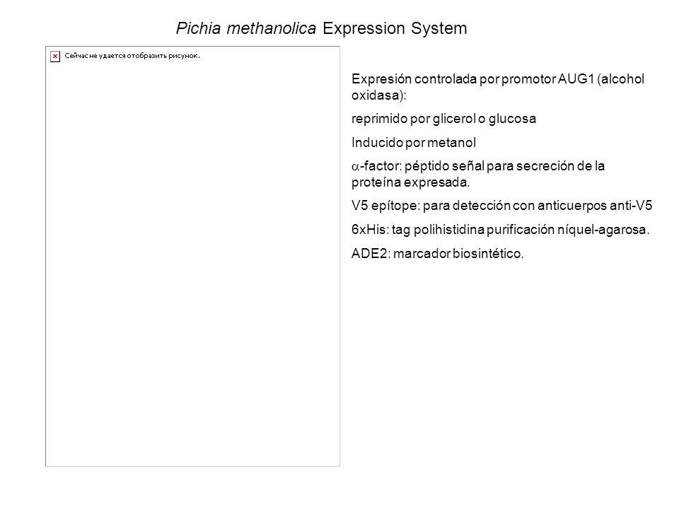 Pichia methanolica Expression System