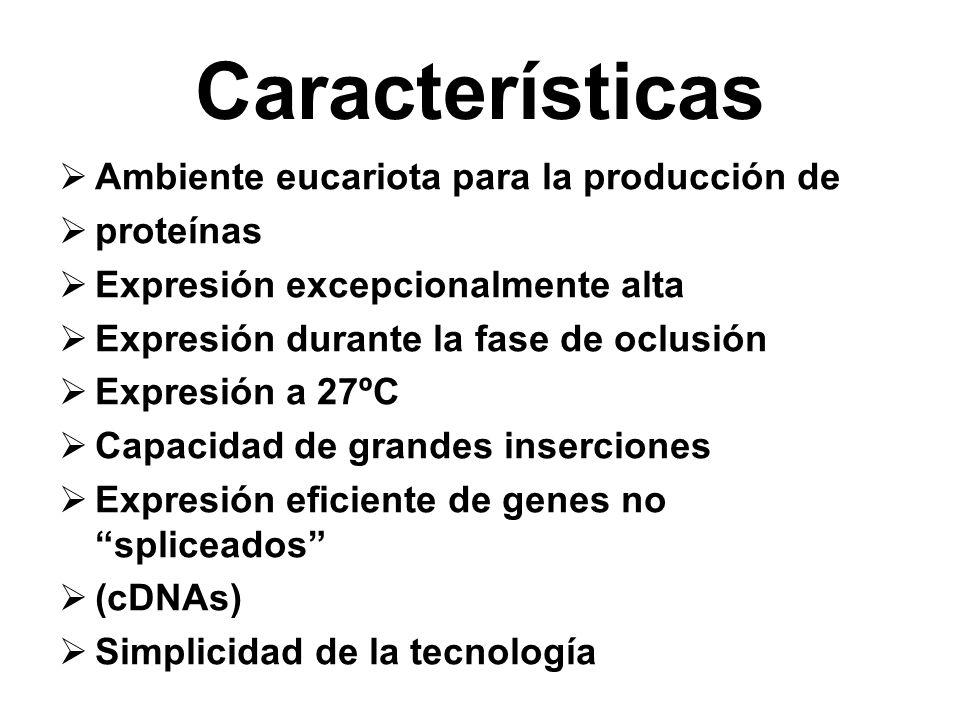 Características Ambiente eucariota para la producción de proteínas