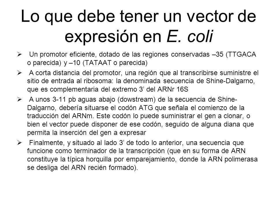 Lo que debe tener un vector de expresión en E. coli
