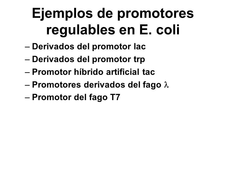 Ejemplos de promotores regulables en E. coli
