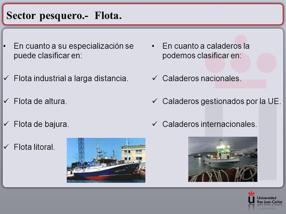 Sector pesquero.- Flota.