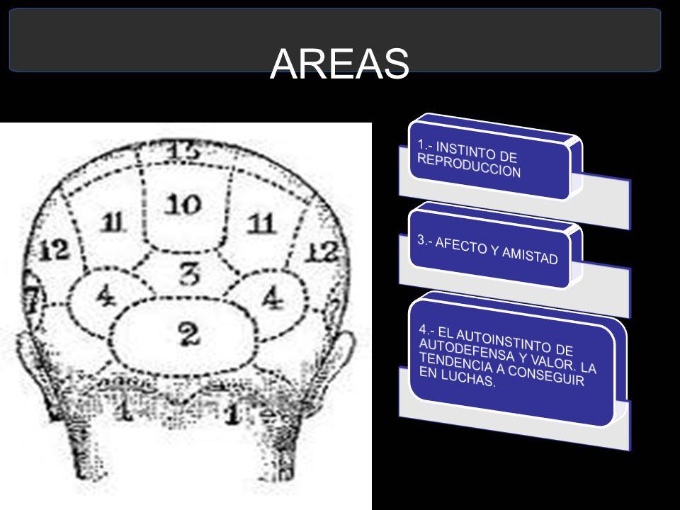 AREAS 1.- INSTINTO DE REPRODUCCION. 3.- AFECTO Y AMISTAD.