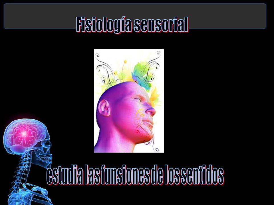 Fisiología sensorial estudia las funsiones de los sentidos