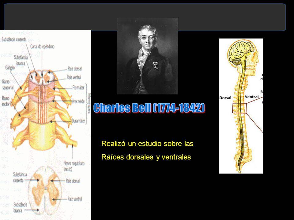 Charles Bell (1774-1842) Realizó un estudio sobre las