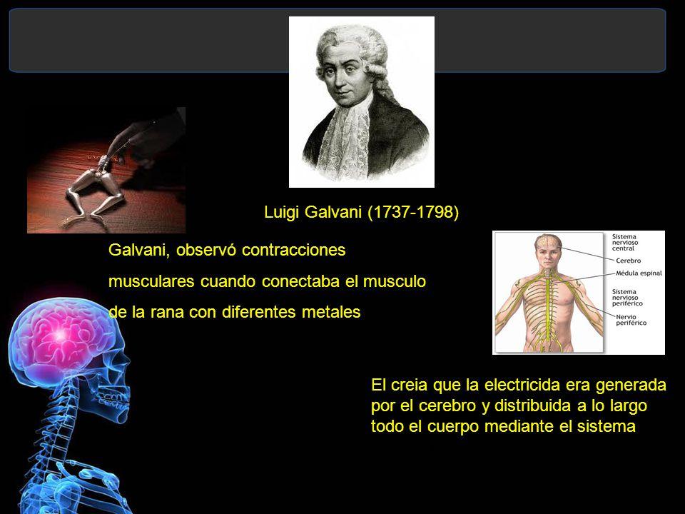 Luigi Galvani (1737-1798) Galvani, observó contracciones. musculares cuando conectaba el musculo. de la rana con diferentes metales.