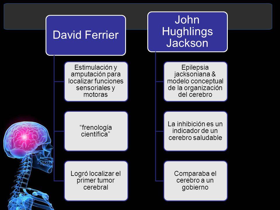 frenología científica Logró localizar el primer tumor cerebral