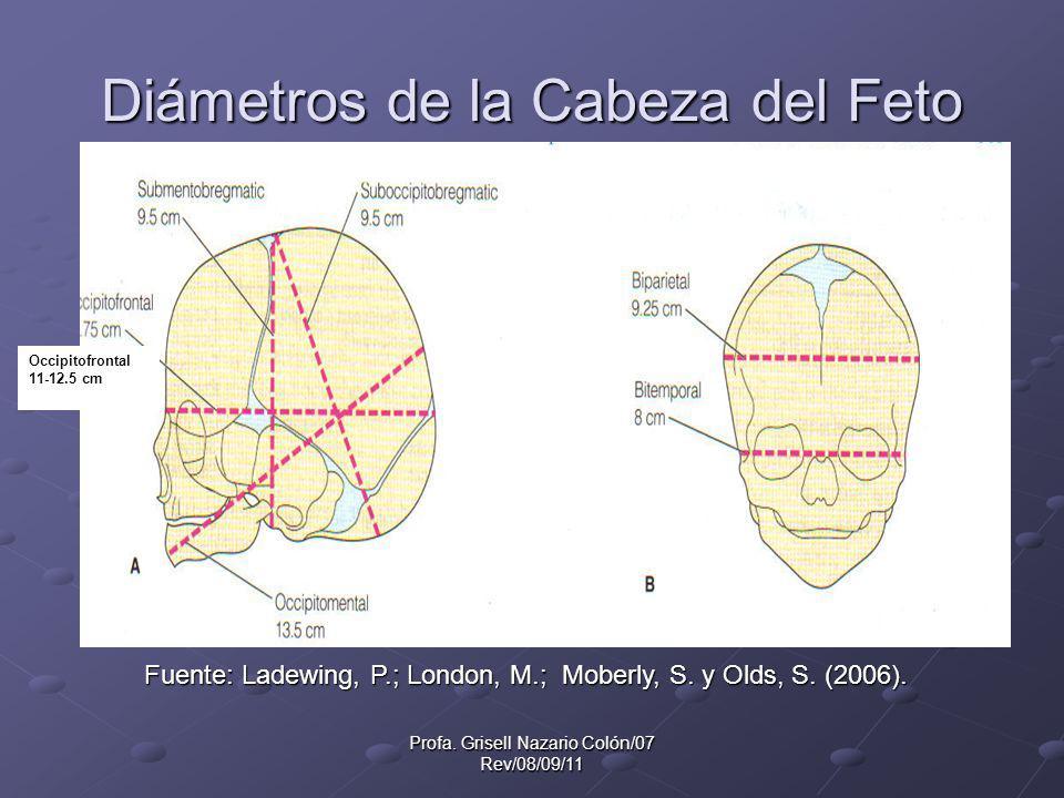 Diámetros de la Cabeza del Feto