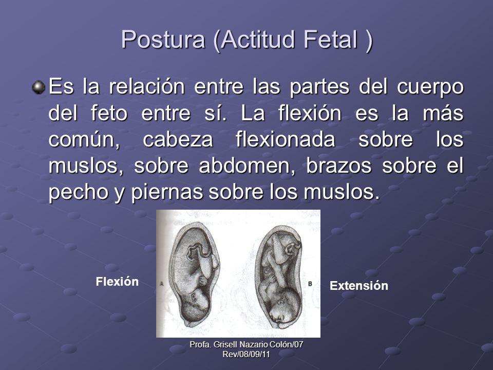 Postura (Actitud Fetal )