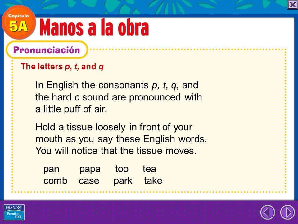 pan papa too tea comb case park take
