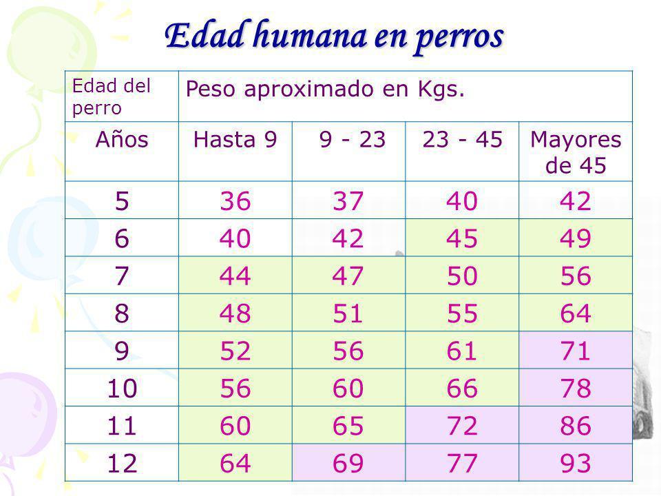 Edad humana en perros Edad del perro. Peso aproximado en Kgs. Años. Hasta 9. 9 - 23. 23 - 45. Mayores de 45.