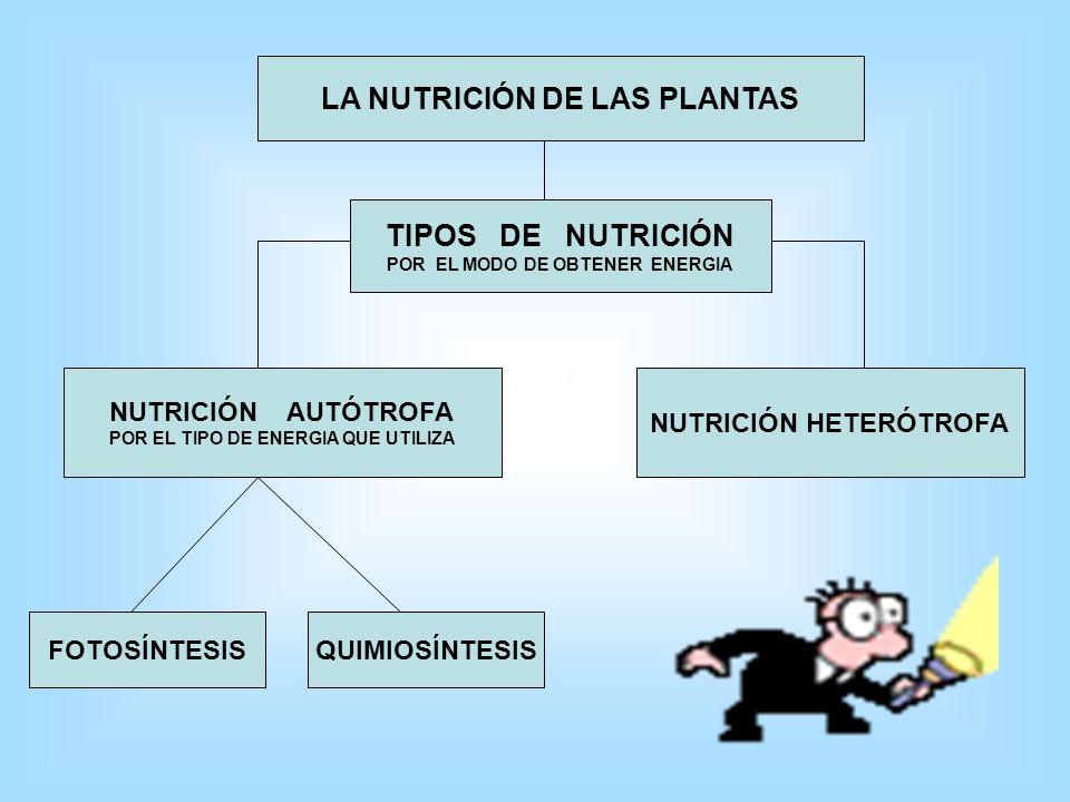 LA NUTRICIÓN DE LAS PLANTAS TIPOS DE NUTRICIÓN
