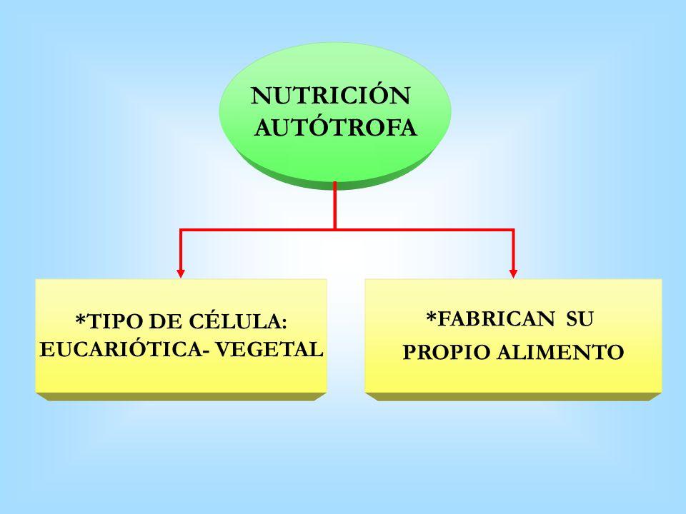 NUTRICIÓN AUTÓTROFA *TIPO DE CÉLULA: *FABRICAN SU EUCARIÓTICA- VEGETAL