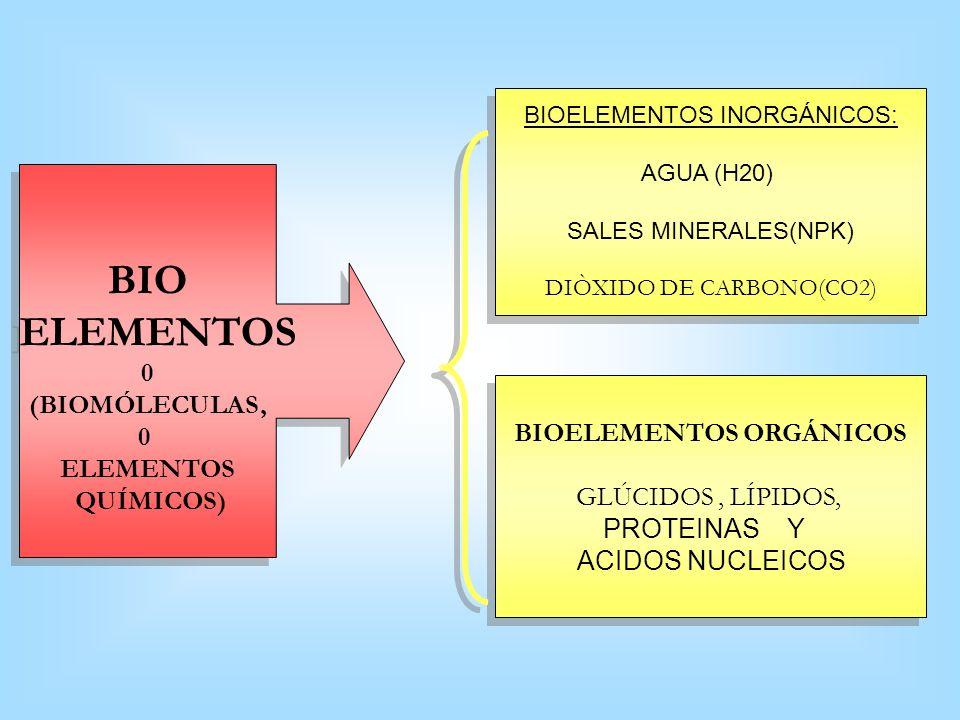 BIOELEMENTOS ORGÁNICOS