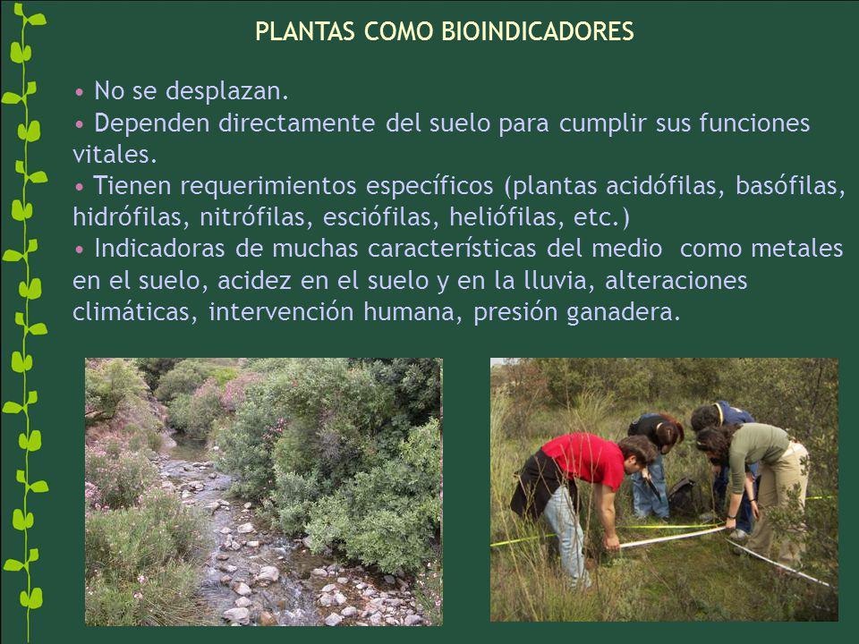 PLANTAS COMO BIOINDICADORES