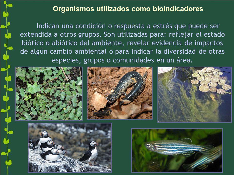 Organismos utilizados como bioindicadores